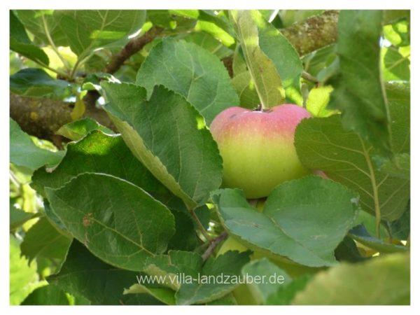 Apfelzeit30