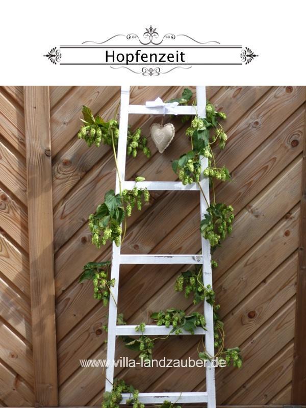 Hopfen 2
