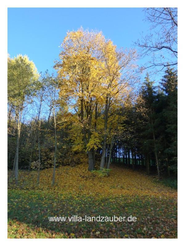 Wald59