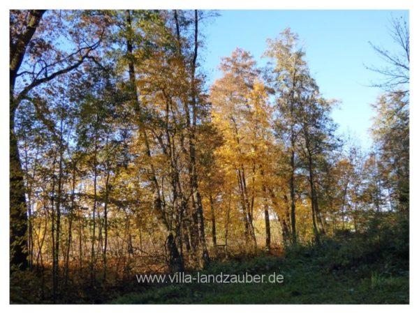 Wald70