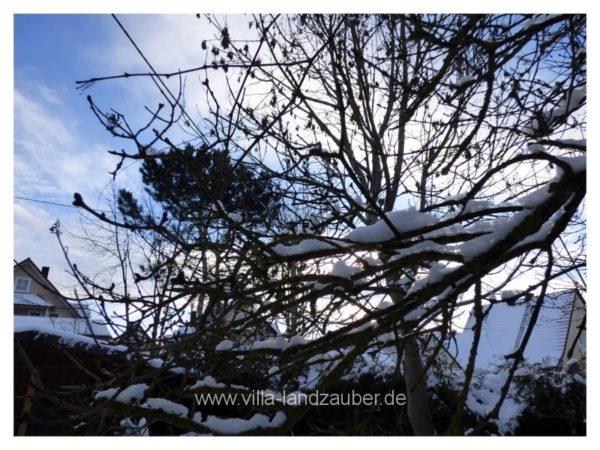 Winterzauber36