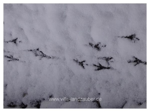 Winterzauber46