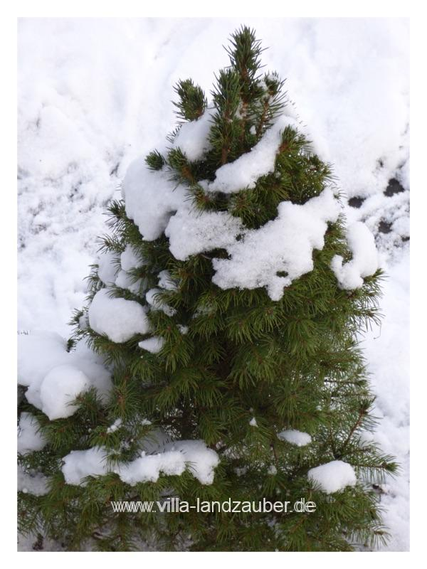 Winterzauber5