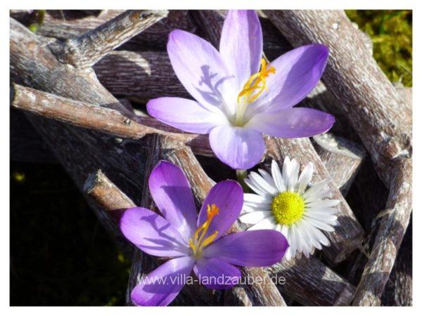 Blumen12