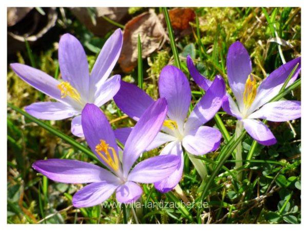 Blumen14