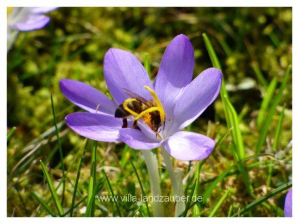 Blumen15