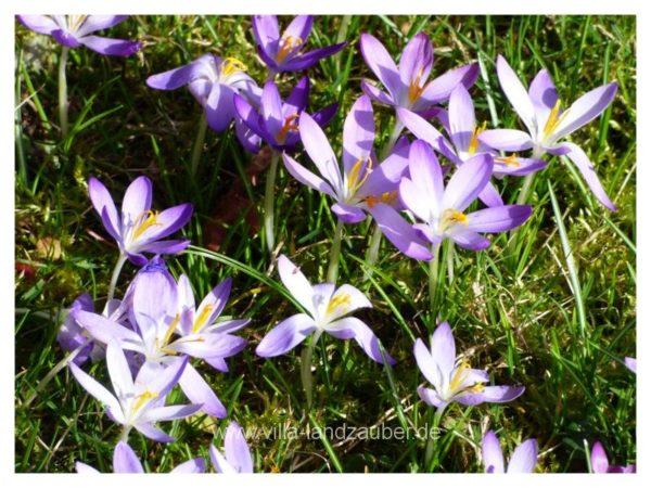 Blumen34