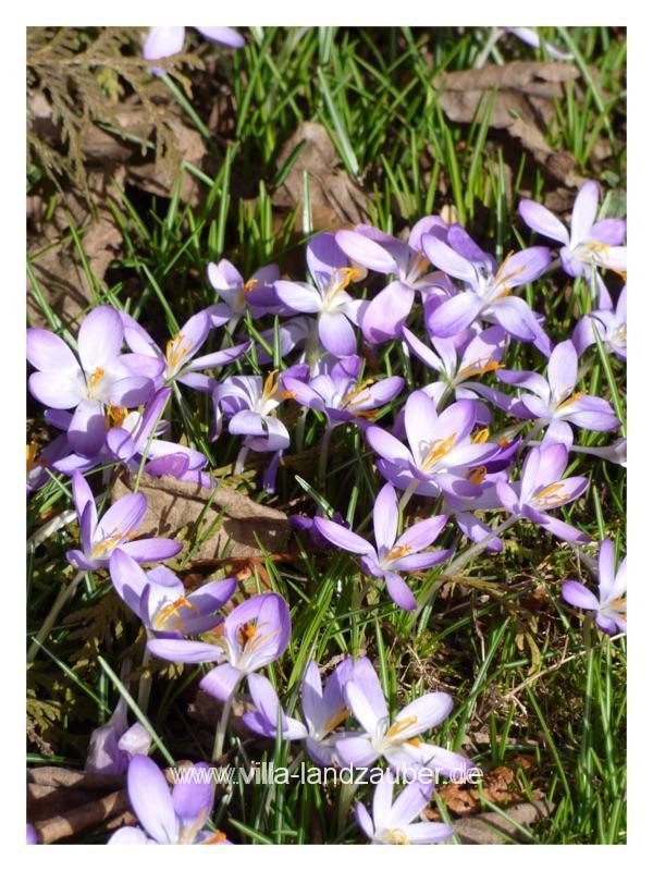 Blumen35