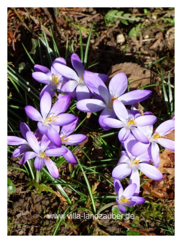 Blumen36