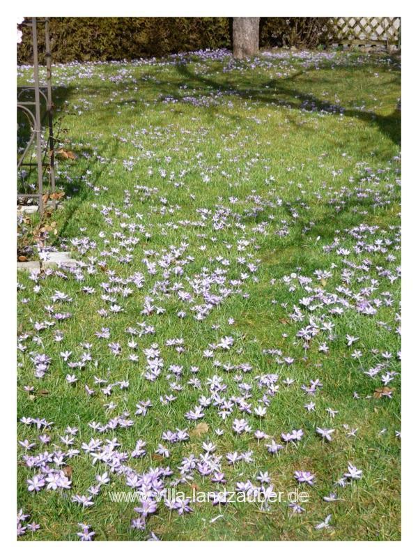 Blumen44