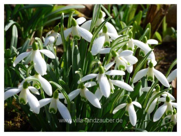 Blumen8