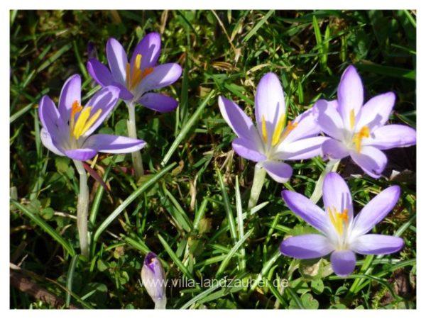 Spring59