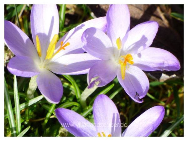 Spring60