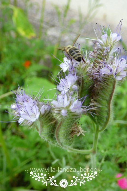 Beetle38