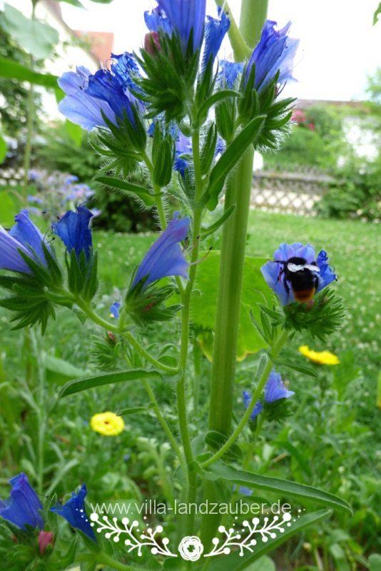 Beetle50