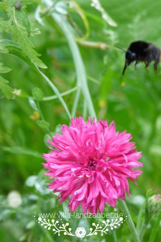 Beetle60