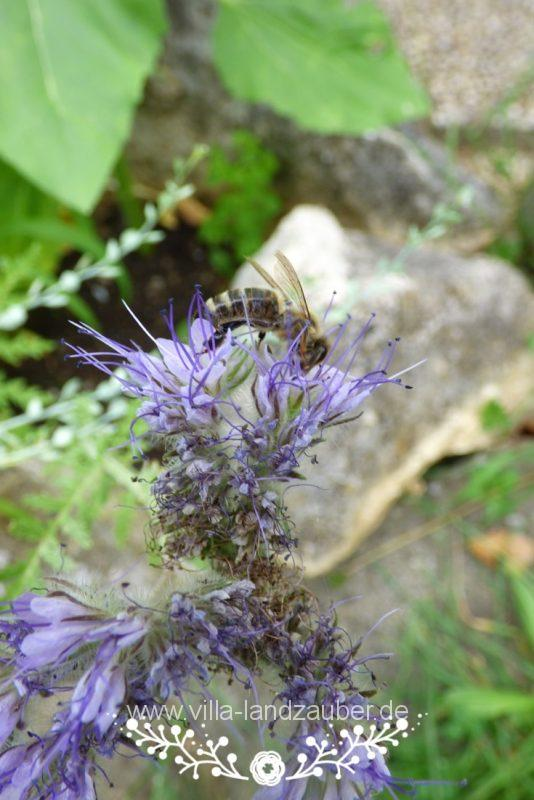 Beetle61
