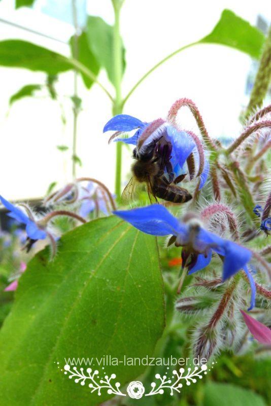 Beetle63
